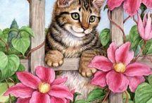 pisicik4