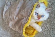 Cat Articles from Pet Care Corner