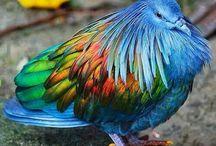 güvercin ve kuş türleri - Birds