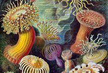Ernst Haeckl / by Amanda Briggs