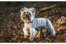 LORD LOU - Luxury pet clothing