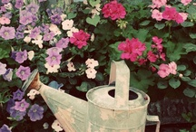 Watering can / by J L