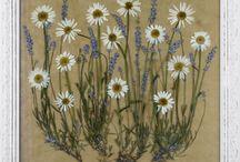 Засушенный цветок искусство