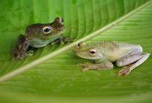 Frogs, kikkers