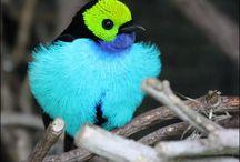 Volière virtuelle à ciel ouvert - Magnifiques oiseaux aux plumages colorés / De très beaux oiseaux aux plumages colorés Oiseaux de France et du Monde