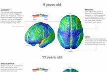 Brain ..!..
