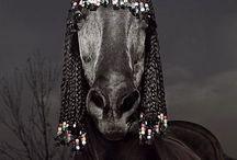 Horse braiding / by Tracey Daniels