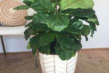 Pflanzen und Deko