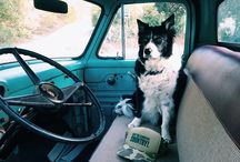Trucks and Dogs