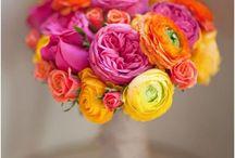 Color / Color inspiration / by Jamie Austin