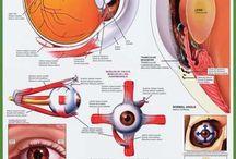 Anathomy