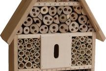 maison insectes
