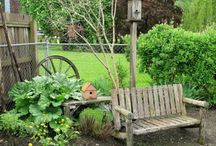backyard / by Nicole Gotts