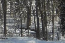 Pocono Nature Shots from Bobbie / by Bobbie Smith