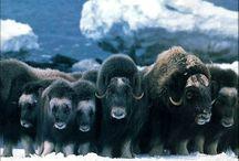Amazing animals...