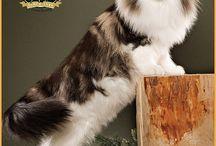 feline frumoase