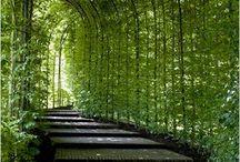 Green Garden desidn