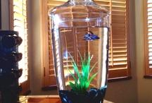 Fish Bowl Ideas