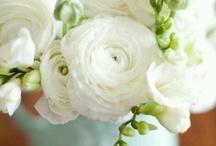 Spring Wedding - Ranunculus
