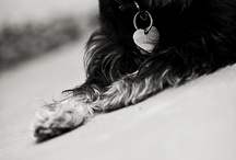 My Four Little Schnauzers  / by Meg Haney