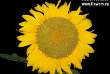 flowersI like