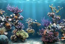 Projeto de Pesquisa e Criação : Oceano