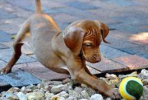 kutya/doggy