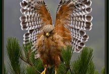 Birds... <3
