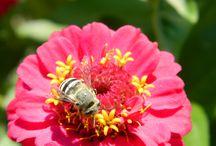 Flowers / Flowers from my little garden. Enjoy!