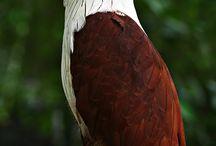 Birds (•ө•)