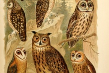 Vintage Illustrations: Animals and Insect Prints / by Mishele DuPree Winter