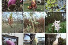wiosna nad Wartą / zdjęcia ze spacerów