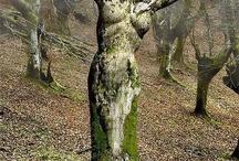 Beautiful Natural Art