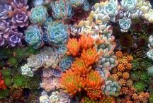 Interesting Gardens Underwater Succulents