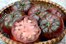 tomato ,chilli and drip irigation garden...