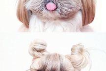 Fryzury dla psa