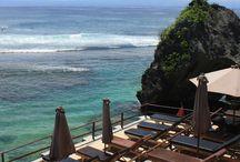 Bali singlefin