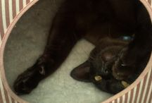 4 Paws Cat Motel / 4 Paws Cat Motel - Pets on Holiday, Pets Accommodation, Indoor Pet Boarding