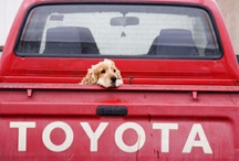 Pets and Cars  / Who doesn't love puppies...seriously? Great pics of pets and/or cars we like.