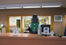 SCF's Maverick the Manatee / Check out Maverick in Venice Campus Library!