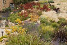 Australian Native Perennials / Australian Native Perennial Plants