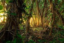 SCENE • Jungle
