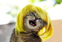 HAIR  / by Donni Main