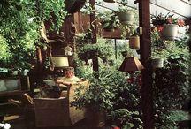 zimne záhrady,skleníky