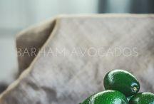 BARHAM AVOCADOS - JENNI FINN PHOTOGRAPHY
