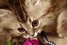 gattini e farfalle