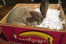 For Bolito (dwarf rabbit)