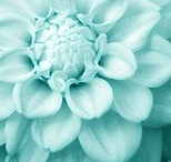 Color: Mint / by Susie Quillin