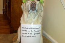 ~Dog Shaming~