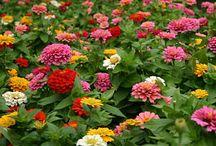 Flower Buisness